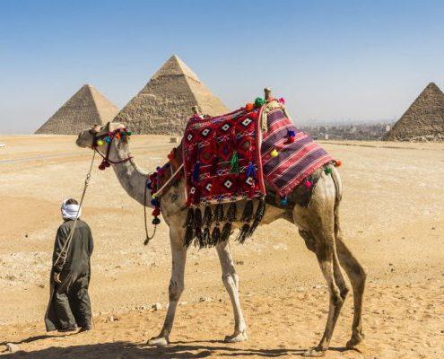 camellos en las piramides